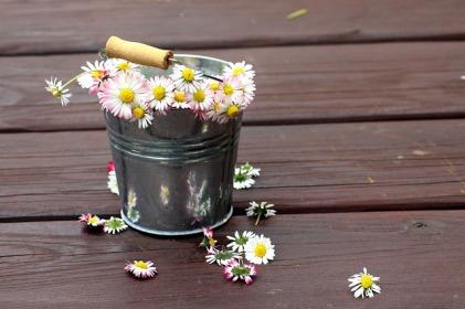 daisies-4220153_640